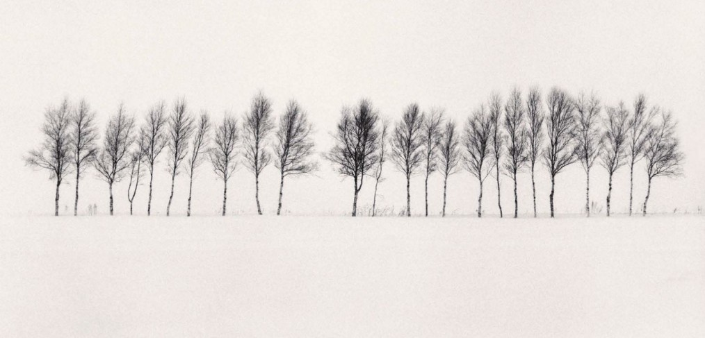 twenty-four-trees-abashiri-hokkaido-japan-by-michael-kenna-2005-1014x487