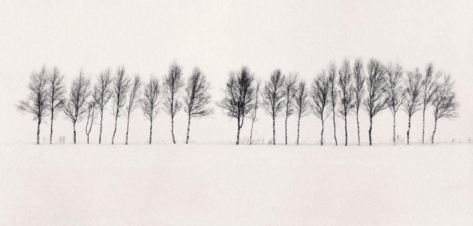 twenty-four-trees-abashiri-hokkaido-japan-by-michael-kenna-2005-1014x487